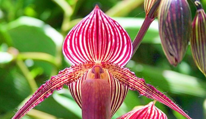 Top 10 Most Expensive Flowers in the World