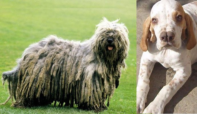 Top 10 Unique Dog Breeds You May Never Come Across